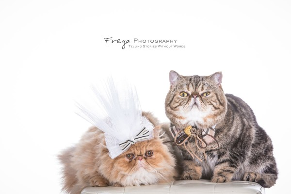 studio-prewedding-photos-hk-pet3