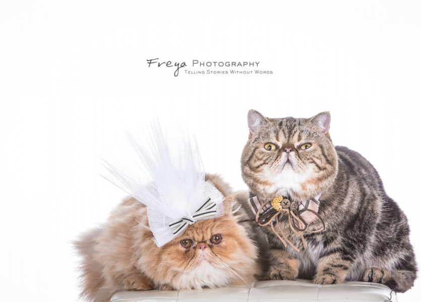 studio prewedding photos hk pet3