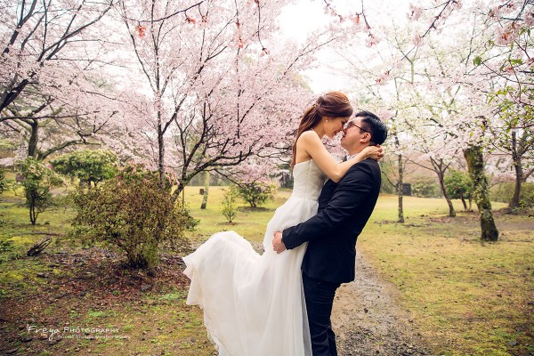 京都-pre-wedding-cherry1